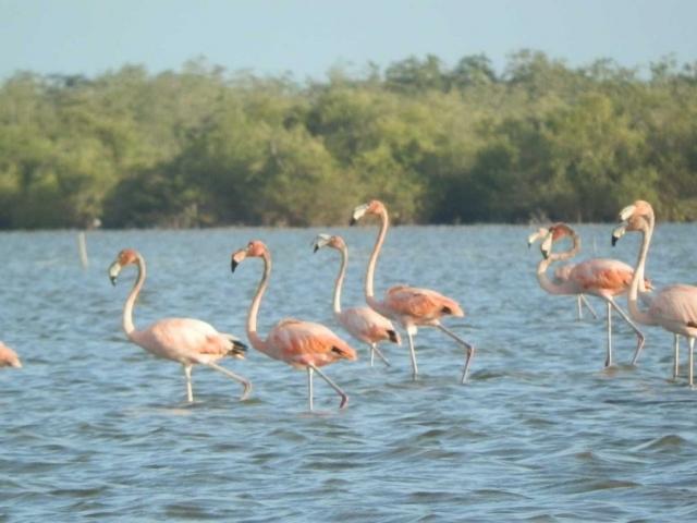 roze-flamingo's